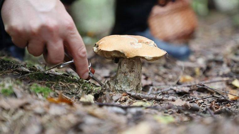 грибы на востоке подмосковья сейчас